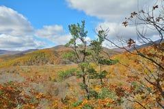 在秋天taiga 2的Cloudscape 库存照片