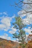 在秋天taiga 1的Cloudscape 免版税库存照片