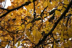 在秋季低角度视图的橙树 免版税图库摄影