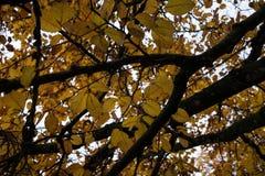 在秋季低角度视图的橙树 免版税库存图片