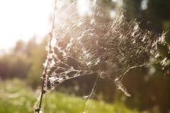 在秋季日出的蜘蛛网 免版税库存照片