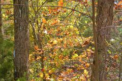 在秋季期间,田纳西小山在明亮的颜色被盖 图库摄影