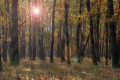 在秋季的森林视图 库存图片