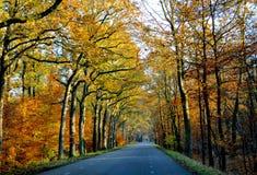 在秋季的美丽的颜色叶子 免版税图库摄影