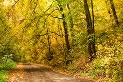 在秋季的路在森林 库存图片