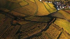 在秋季葡萄园的鸟瞰图 影视素材