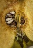在种子裁减的柑橘  库存图片