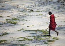在种族衣裳的年轻人马塞语走沿海滩的 桑给巴尔 免版税库存图片