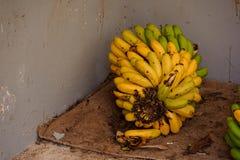 在种植园的成熟香蕉在大加那利岛海岛,西班牙 库存照片