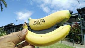 在科夫斯港的大香蕉 库存图片