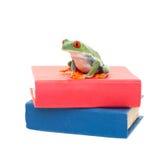 在科学书的青蛙 免版税库存图片