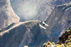在科尔卡峡谷,秘鲁,南美的飞行神鹰 免版税库存照片