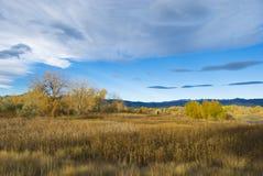 在科罗拉多大草原的秋天场面 库存照片