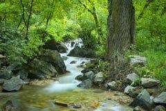 在科罗拉多山的小河 库存照片