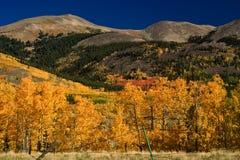 在科罗拉多山的秋天颜色  免版税库存照片