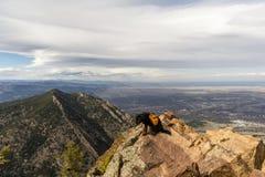 在科罗拉多山顶的狗 免版税图库摄影