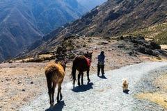 在秘鲁的山的漫长的路 免版税库存图片