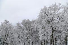 在积雪下的树在山滑雪胜地顶部 图库摄影