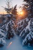 在积雪的冬天森林的日出 免版税库存照片
