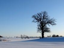 在积雪的冬天风景的孤立不生叶的树 免版税库存图片
