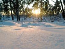 在积雪的地面的冬天树 库存图片