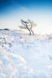 在积雪的山的两棵树 库存图片