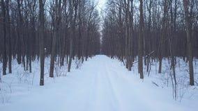 在积雪的路的鸟瞰图在森林风景冬天风景 股票录像