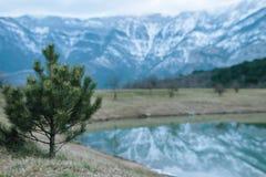 在积雪覆盖的山背景的NChristmas树和有反射的一个湖 n 免版税库存照片