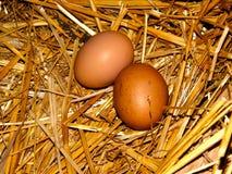 在秸杆巢的鸡鸡蛋  免版税库存照片