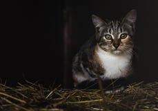 在秸杆的一只猫有黑暗的背景 免版税库存图片