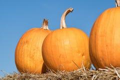 在秸杆的不同的橙色南瓜在秋天 万圣夜,感谢 免版税库存照片