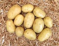 在秸杆的土豆 库存图片