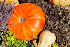 在秸杆的橙色和黄色南瓜 图库摄影