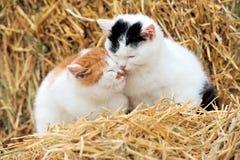 在秸杆的猫 免版税库存图片