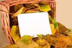 在秸杆篮子的秋叶与白色拷贝空间卡片 免版税库存图片