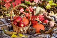 在秸杆篮子的秋天菜 库存照片