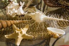 在秸杆篮子的长的圆锥形海洋壳 免版税库存图片
