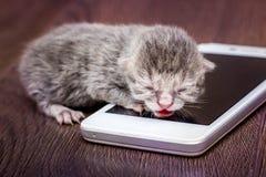 在移动电话附近的小的灰色小猫 小婴孩是callin 图库摄影