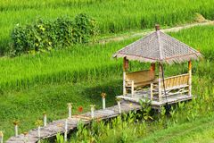 在稻田中的竹眺望台 免版税库存照片