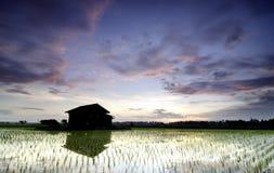 在稻田中间的被毁坏的木房子在美好的日出背景 免版税库存照片