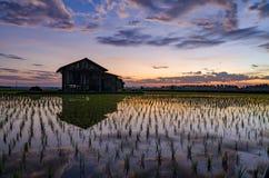 在稻田中间的被毁坏的木房子在美好的日出背景 免版税库存图片