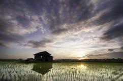 在稻田中间的被毁坏的木房子在美好的日出背景 图库摄影