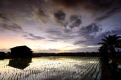 在稻田中间的被毁坏的木房子在美好的日出背景 库存照片
