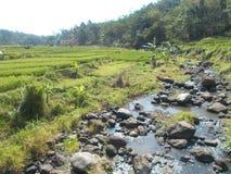在稻田和河的风景 免版税图库摄影