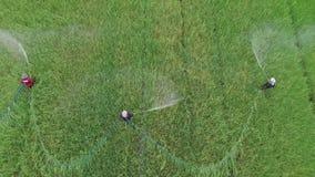 在稻田的农夫喷洒的昆虫化学制品 股票视频