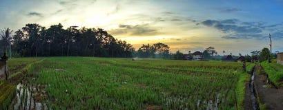 在稻田的日出在巴厘岛,印度尼西亚 免版税库存图片