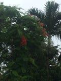 在空气的美丽的橙色花 免版税库存图片