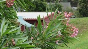 在空气花开花的叶子 库存照片