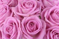 在空白桃红色的玫瑰的花束 免版税库存照片