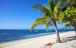 在空白沙子热带海滩的棕榈树在Malapascua海岛,菲律宾 图库摄影